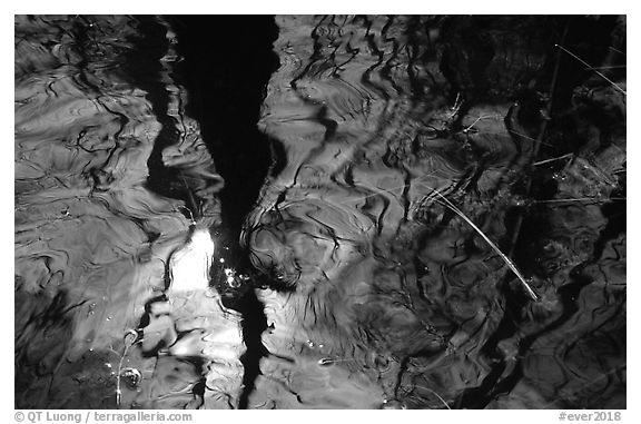 Reflection in black water of a cypress dome. Everglades National Park (black and white)