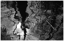 Reflection in black water of a cypress dome. Everglades National Park ( black and white)