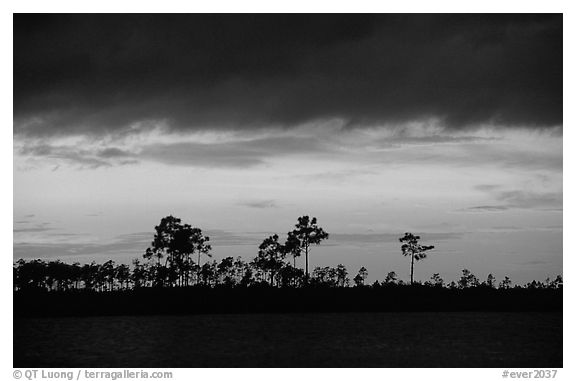 Stormy sunset and pine trees,  Pine Glades Lake. Everglades National Park, Florida, USA.