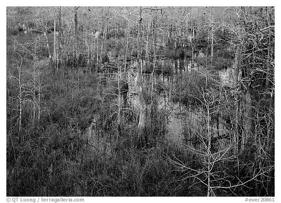 Freshwater swamp with sawgrass and cypress seen from above, Pa-hay-okee. Everglades National Park (black and white)