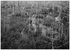 Freshwater swamp with sawgrass and cypress seen from above, Pa-hay-okee. Everglades National Park ( black and white)