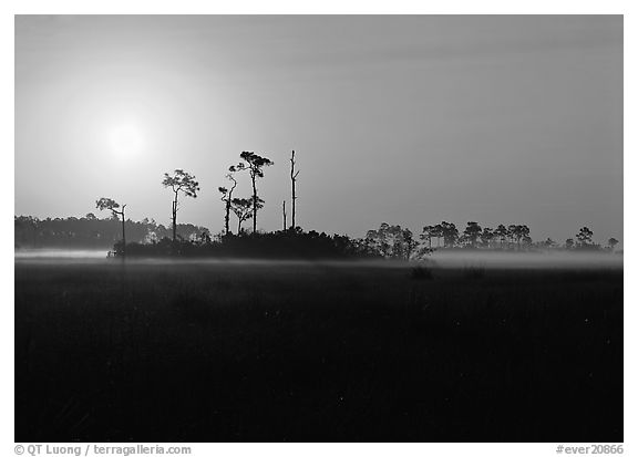 Sun rising behind group of pine trees. Everglades  National Park (black and white)