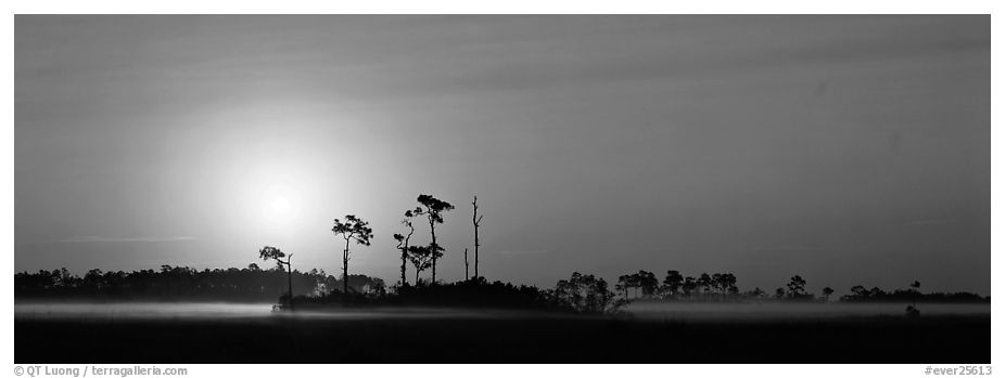 Landscape of pine trees and grasslands at sunrise. Everglades National Park (black and white)