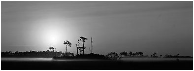 Landscape of pine trees and grasslands at sunrise. Everglades National Park (Panoramic black and white)