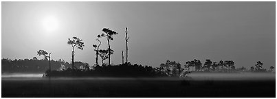 Sunrise landscape with mist on the ground. Everglades  National Park (Panoramic black and white)