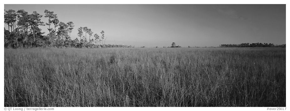 Sawgrass landscape. Everglades National Park (black and white)