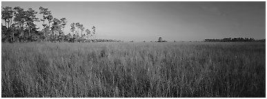 Sawgrass landscape. Everglades National Park (Panoramic black and white)