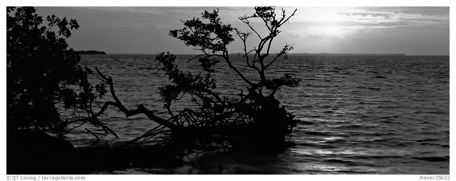 Mangroves and sunrise over Florida Bay. Everglades National Park (black and white)