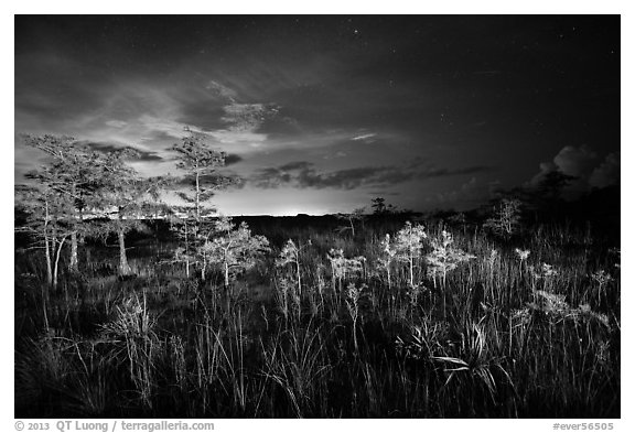 Dwarf cypress at night, Pa-hay-okee. Everglades National Park (black and white)