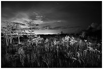 Dwarf cypress at night, Pa-hay-okee. Everglades National Park, Florida, USA. (black and white)