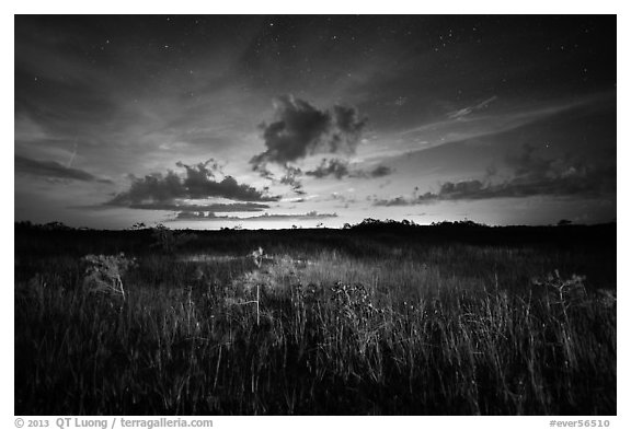 Sawgrass and dwarf cypress at night. Everglades National Park (black and white)