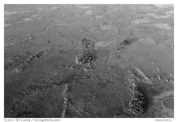 Aerial view of freshwater marl prairie. Everglades National Park (black and white)