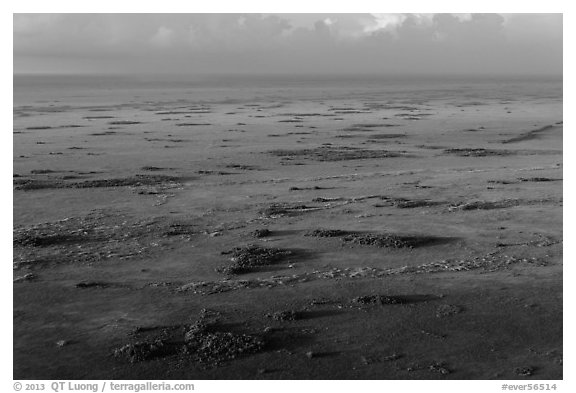 Aerial view of Shark River Slough. Everglades National Park (black and white)