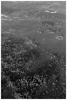 Aerial view of cypress and pines. Everglades National Park, Florida, USA. (black and white)