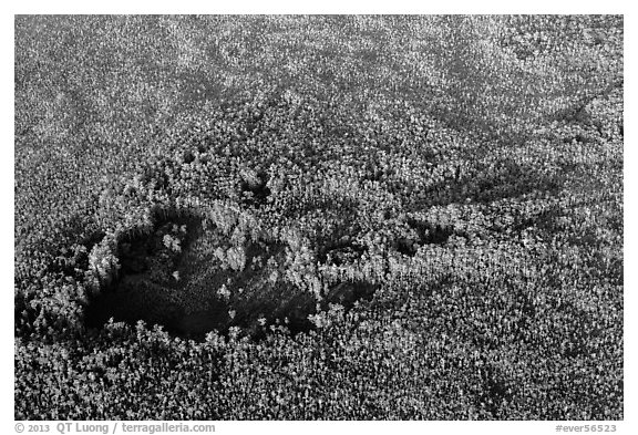 Aerial view of hole in dense cypress forest. Everglades National Park (black and white)