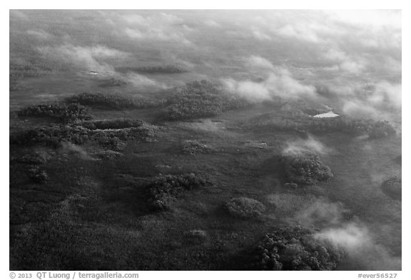 Aerial view of subtropical marsh, trees, and fog. Everglades National Park (black and white)