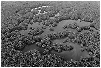 Aerial view of mangrove forest mixed with ponds. Everglades National Park, Florida, USA. (black and white)