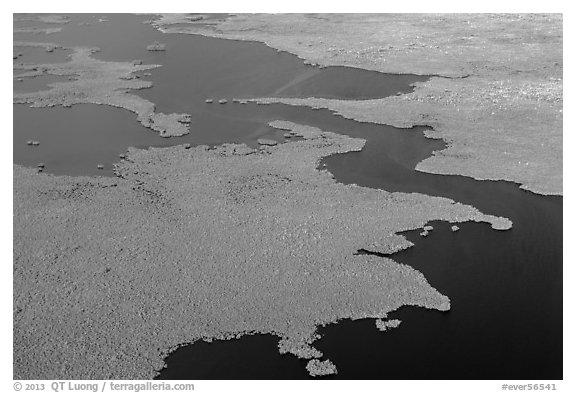 Aerial view of tropical mangrove coast. Everglades National Park (black and white)
