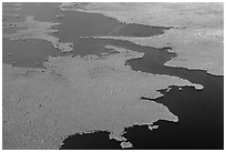 Aerial view of tropical mangrove coast. Everglades National Park, Florida, USA. (black and white)