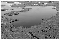 Aerial view of mangrove-fringed lake. Everglades National Park, Florida, USA. (black and white)