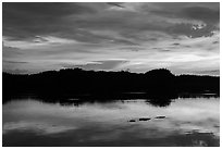 Alligator swimming at sunset, Paurotis Pond. Everglades National Park, Florida, USA. (black and white)