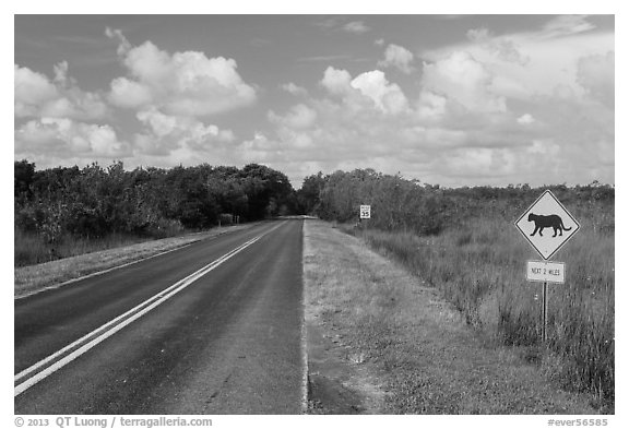 Road with Florida Panther sign. Everglades National Park (black and white)