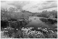 Freshwater slough in summer. Everglades National Park, Florida, USA. (black and white)
