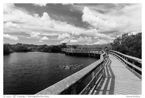 Visitor looking, Anhinga Trail boardwalk. Everglades National Park (black and white)