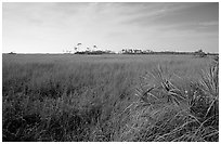 Sawgrass prairie and distant pines near Mahogany Hammock, morning. Everglades National Park, Florida, USA. (black and white)