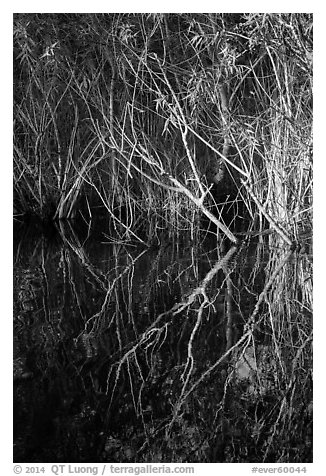 Branches and reflections, Shark Valley. Everglades National Park (black and white)