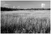 Prairie and hammocks, Shark Valley. Everglades National Park ( black and white)