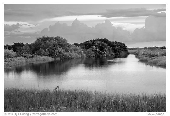 Pond, sawgrass prairie, and hammock, Shark Valley. Everglades National Park (black and white)