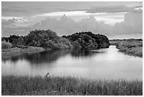 Pond, sawgrass prairie, and hammock, Shark Valley. Everglades National Park ( black and white)