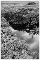 Pond from above, Shark Valley. Everglades National Park ( black and white)