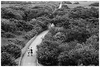 Trail and tram road, Shark Valley. Everglades National Park ( black and white)
