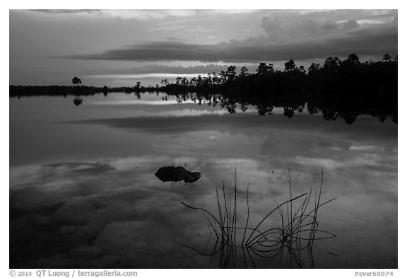Reeds, underwater rocks, Pines Glades Lake. Everglades National Park (black and white)