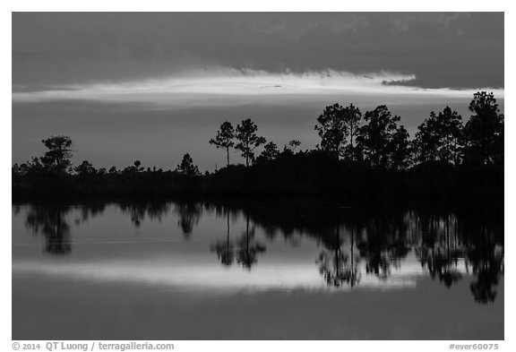 Pines reflected at sunset, Pines Glades Lake. Everglades National Park (black and white)