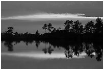 Pines reflected at sunset, Pines Glades Lake. Everglades National Park ( black and white)