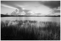 Reeds and Nine-Mile Pond, sunrise. Everglades National Park ( black and white)