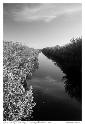 Canal lined up with mangroves. Everglades National Park (black and white)