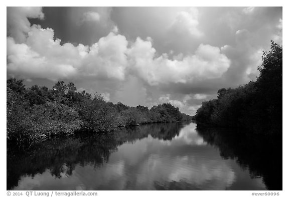 Buttonwood Canal and rain clouds. Everglades National Park (black and white)