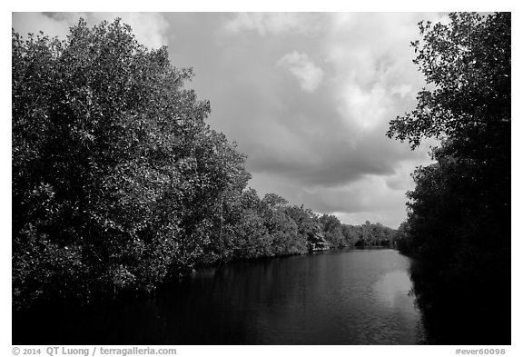 Tropical vegetation growing along canal. Everglades National Park (black and white)