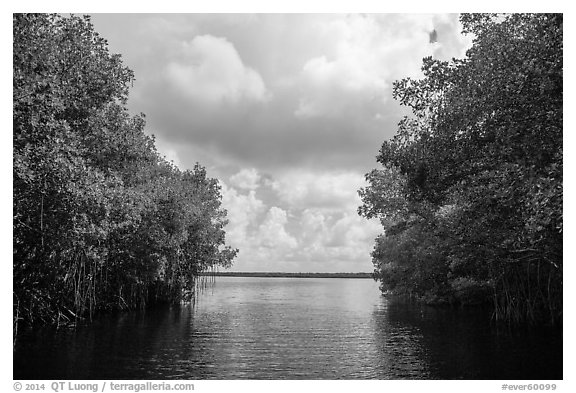 Coot Bay framed by mangroves. Everglades National Park (black and white)