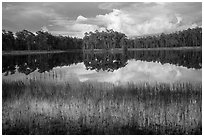 Lake, Long Pine Key. Everglades National Park ( black and white)