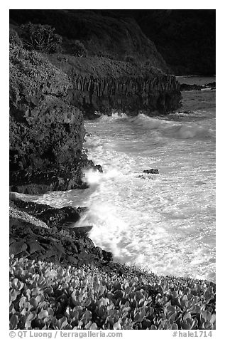 Waves and cliffs at Kipahulu, morning. Haleakala National Park (black and white)