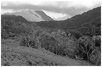 Lush Kipahulu mountains. Haleakala National Park, Hawaii, USA. (black and white)