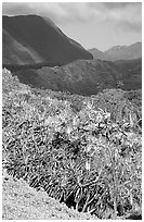 Kipahulu mountains. Haleakala National Park, Hawaii, USA. (black and white)