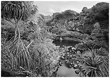 Pandemus trees and some of the seven sacred pools. Haleakala National Park, Hawaii, USA. (black and white)