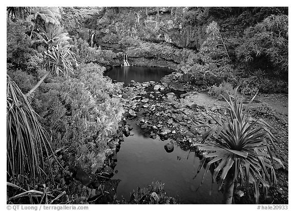Oho o Stream, sunrise. Haleakala National Park (black and white)