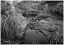 Oho o Stream, sunrise. Haleakala National Park, Hawaii, USA. (black and white)
